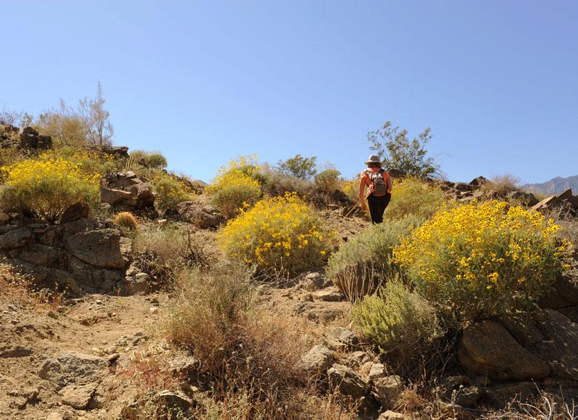 Na pustynnym szlaku nieopodal Palm Springs