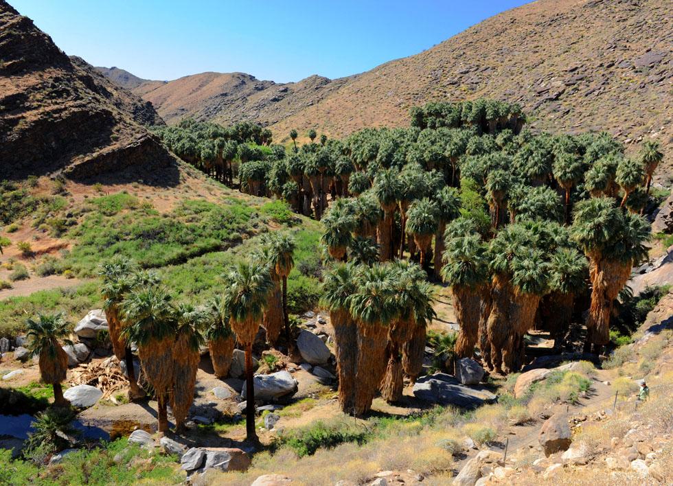 Kanion Palmowy w okolicach miasteczka Palm Springs w Kaliforni