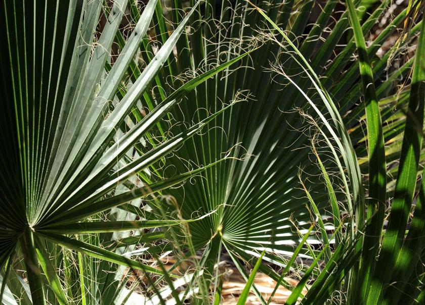 Kompozycja z palmowych liści
