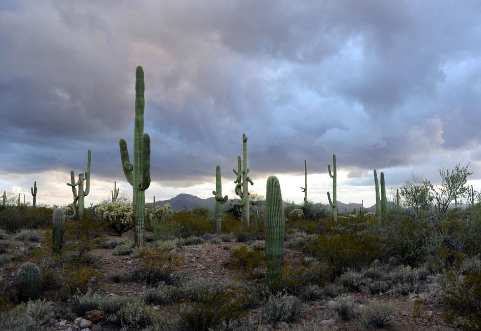 Twilight in Organ Pipe Cactus National Monument