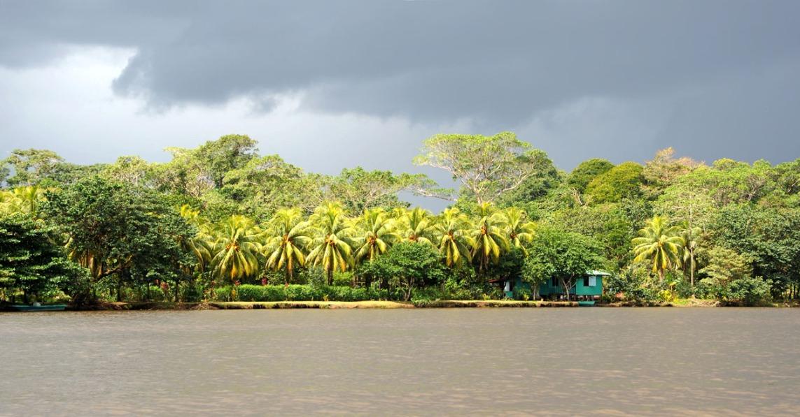 Słońce po tropikalnej burzy - dżungla w Tartuguero.