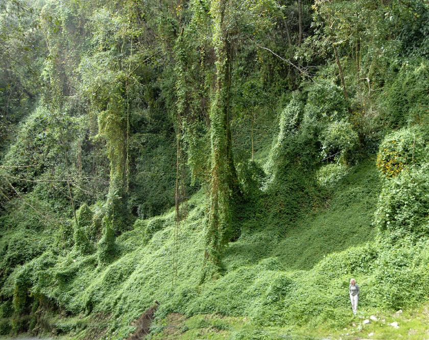 Ocean zieleni - dżungla... Z tego także słynie Kostaryka.