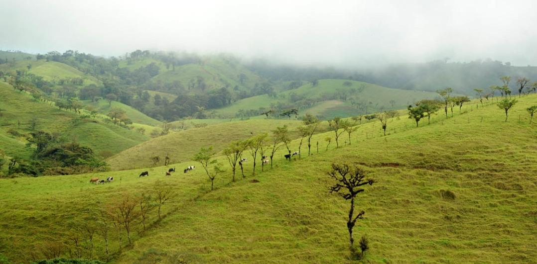 Zielone pastwiska Guanacaste.