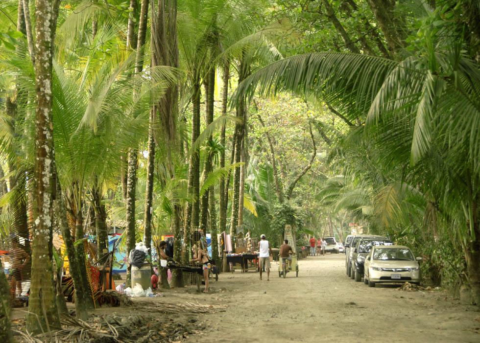 Palmowy gąszcz w Dominical.