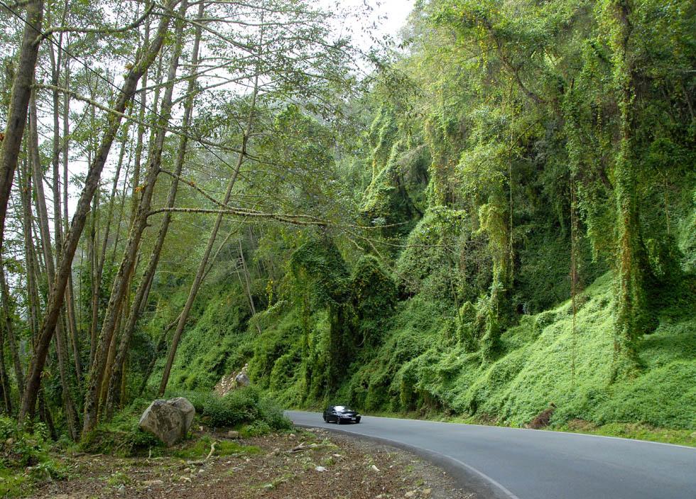 Słynna droga Transamericana, którą można dotrzeć z Alaski do Ziemi Ognistej.