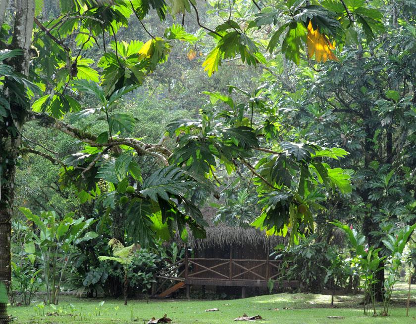 Cudowna zieleń wokół