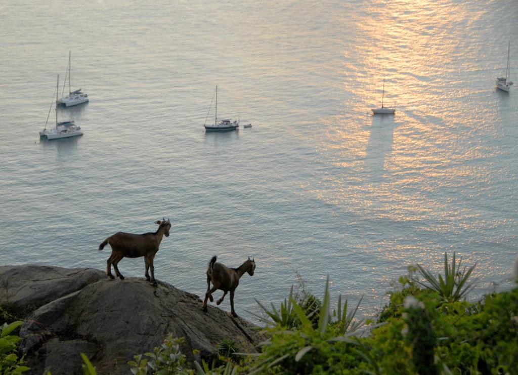 Virgin Island (36)