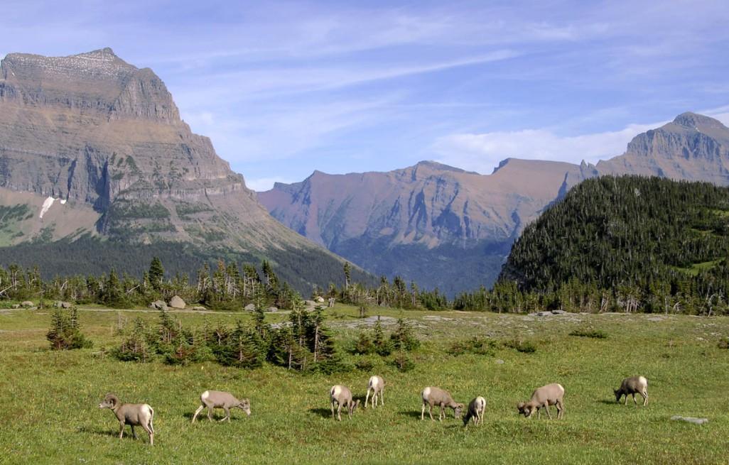 Waterton-Glacier NP (30)
