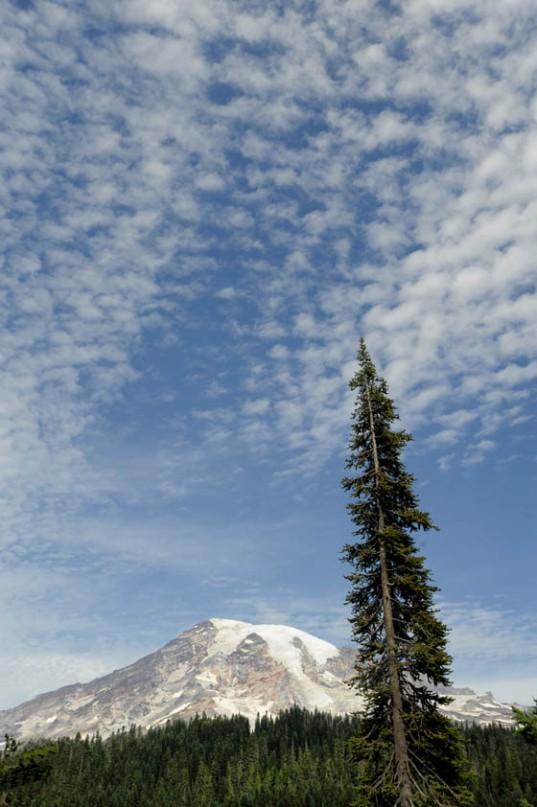 Mt. Rainier (26)