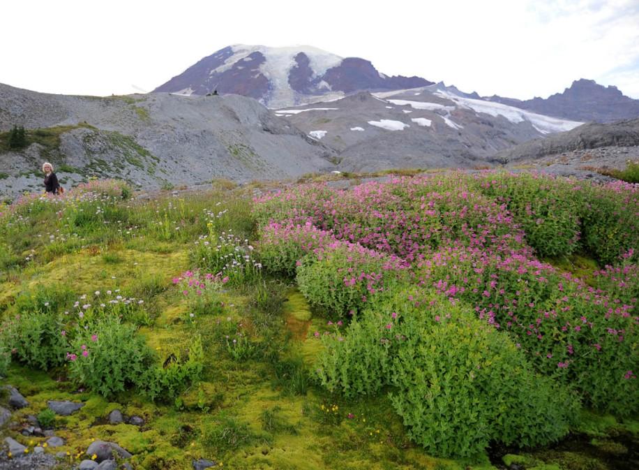Mt. Rainier (29)