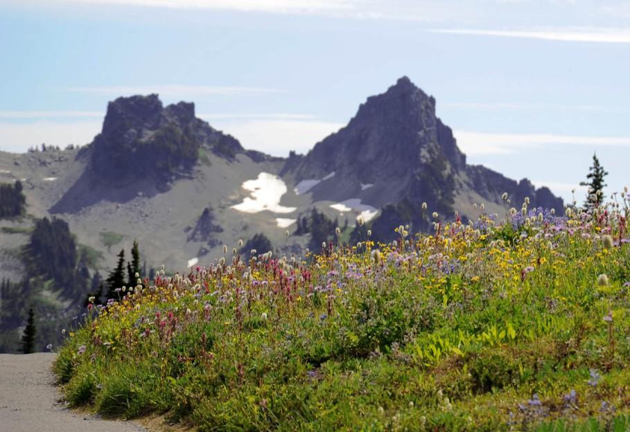 Mt. Rainier (31)