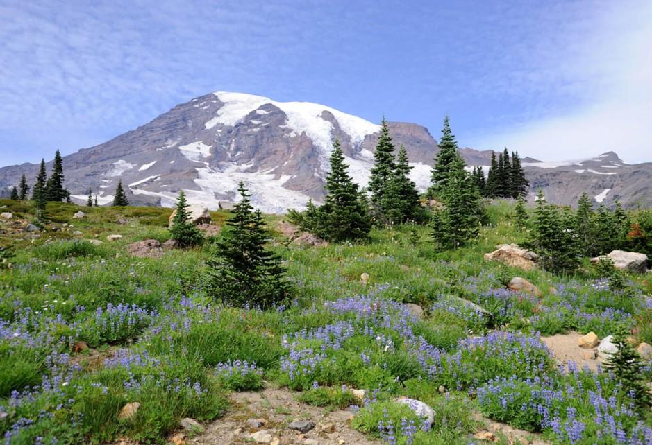 Mt. Rainier (35)