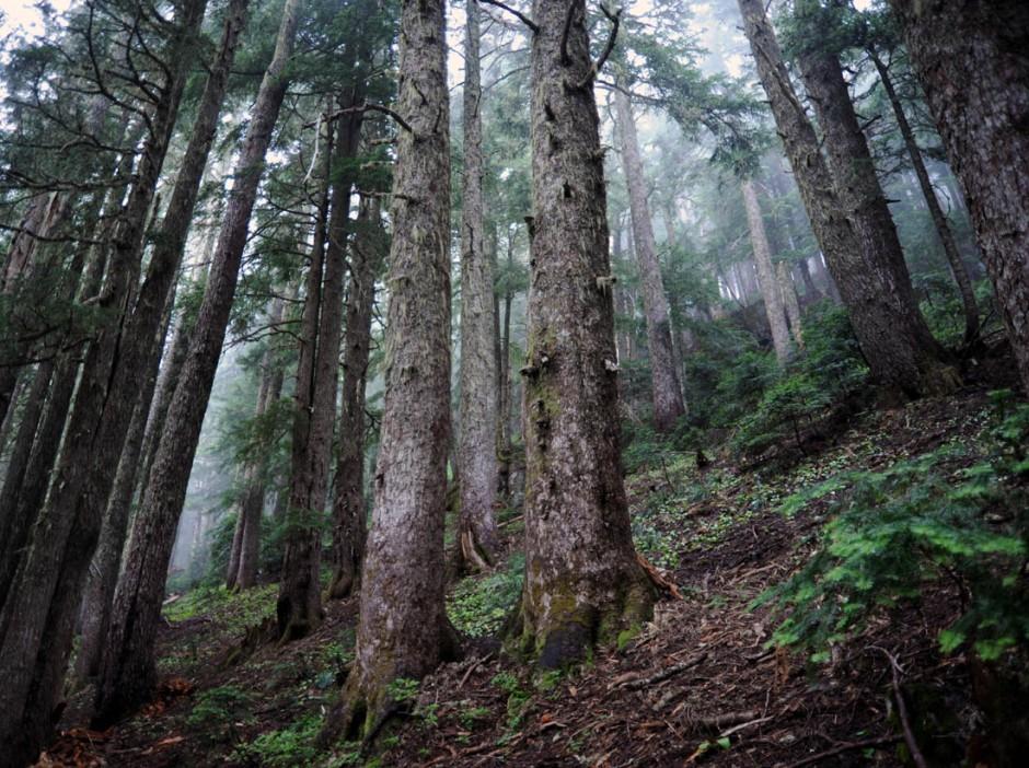 Mt. Rainier (49)