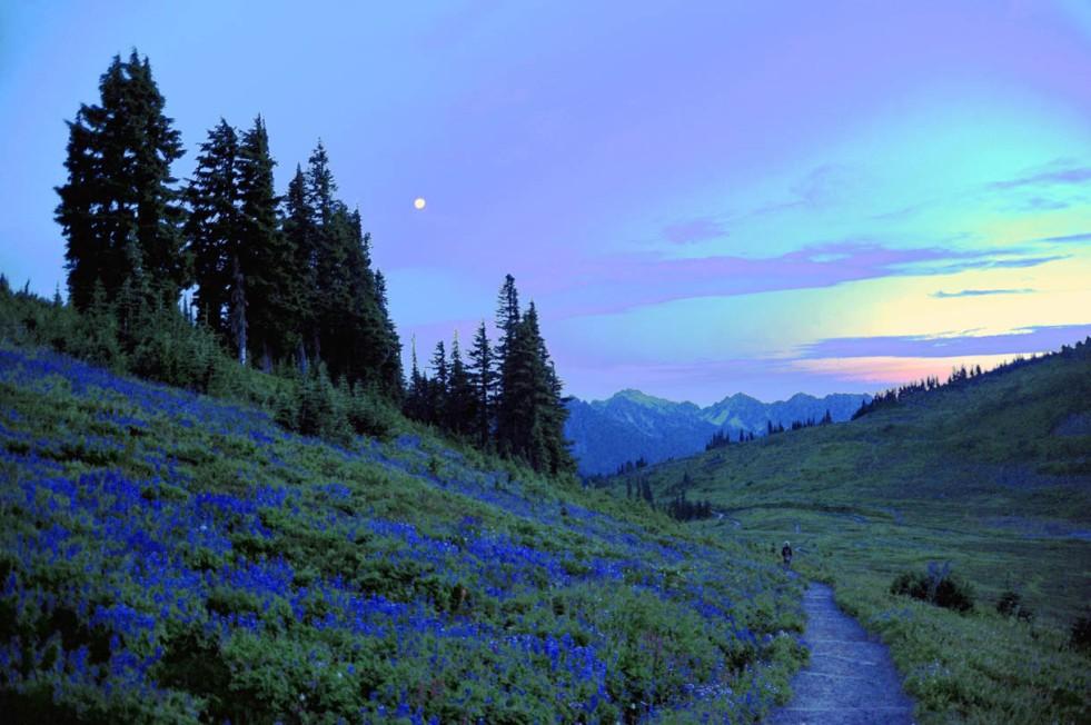 Mt. Rainier (55)