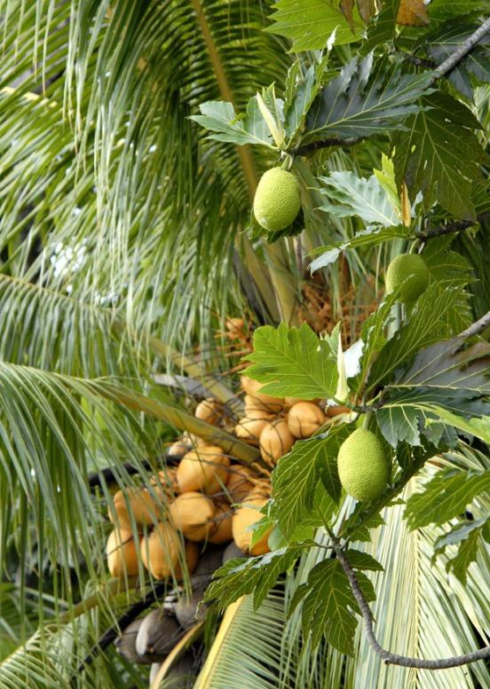 Kostaryka - fauna i flora (12)