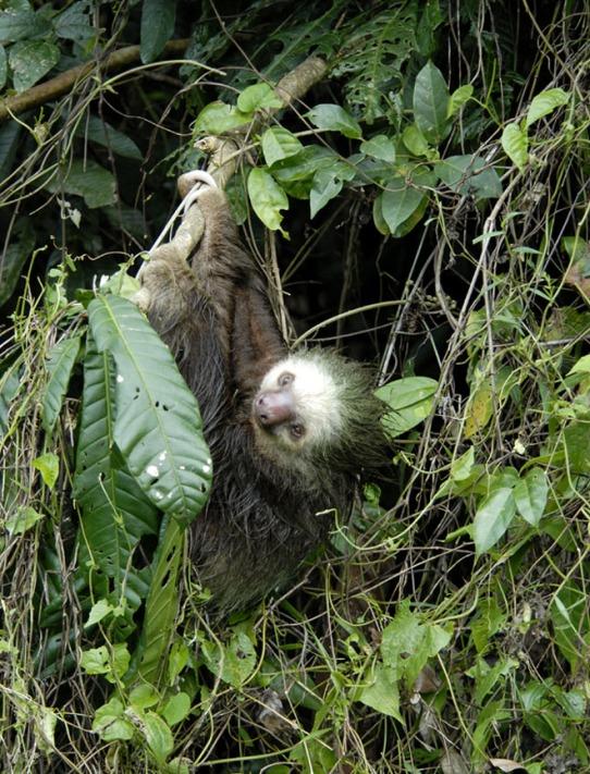 Kostaryka - fauna i flora (14)