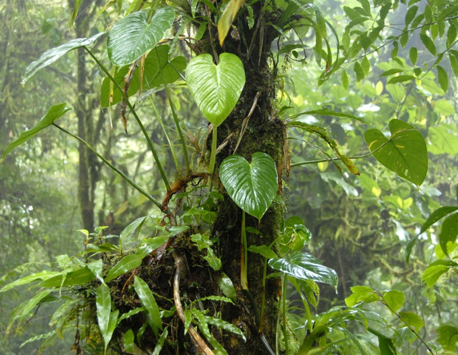 Kostaryka - fauna i flora (15)
