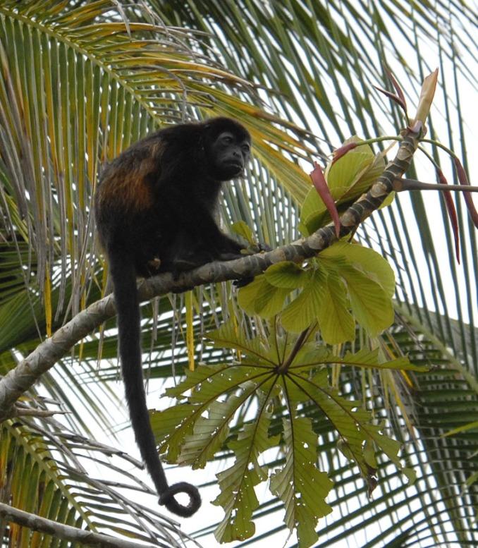 Kostaryka - fauna i flora (16)