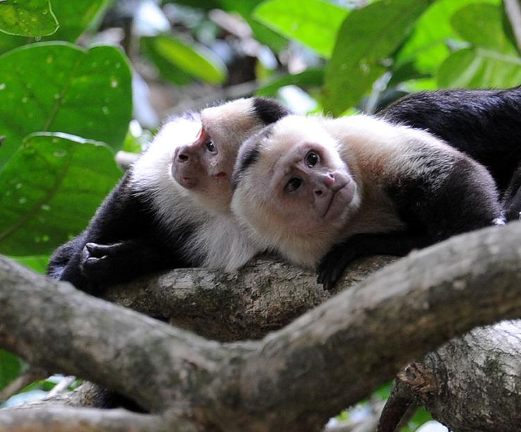 Kostaryka - fauna i flora (17)