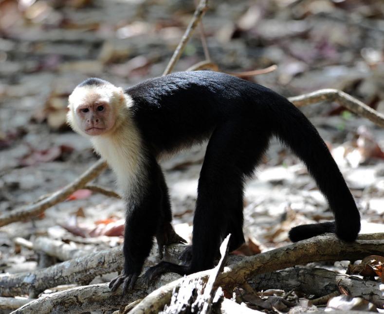Kostaryka - fauna i flora (18)