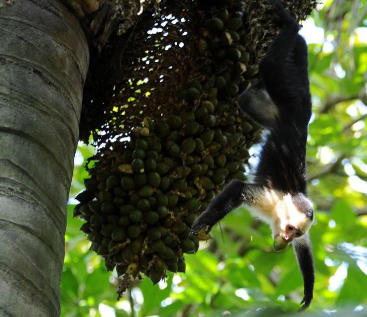 Kostaryka - fauna i flora (19)