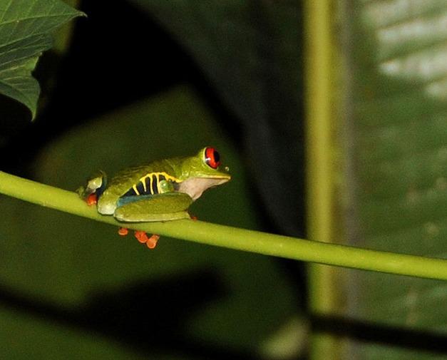 Kostaryka - fauna i flora (2)