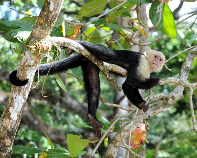 Kostaryka - fauna i flora (20)