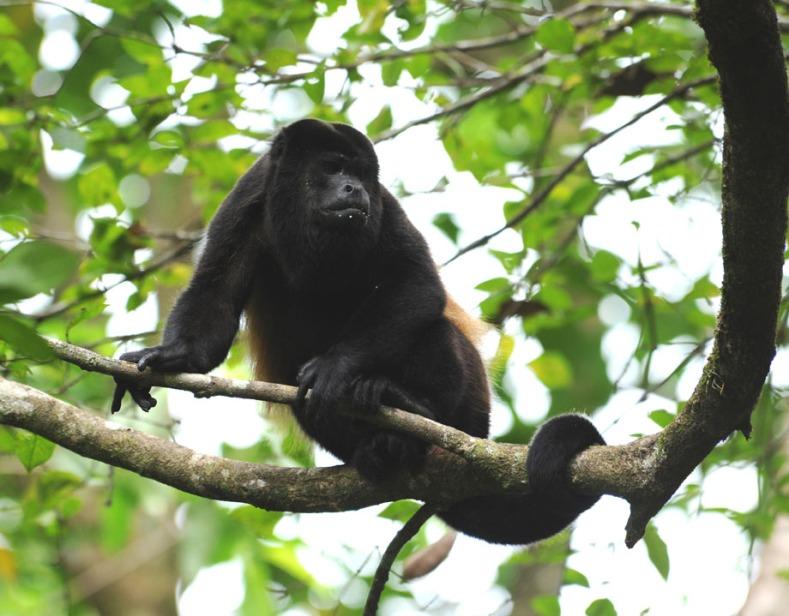 Kostaryka - fauna i flora (21)