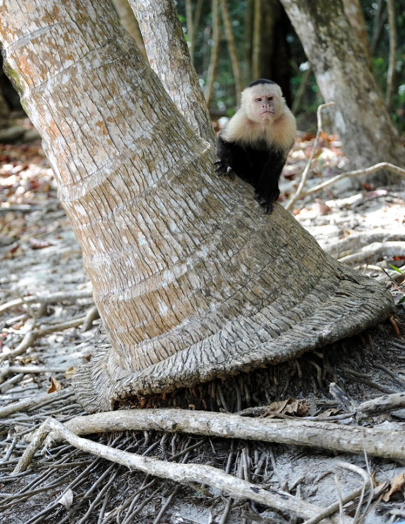Kostaryka - fauna i flora (22)