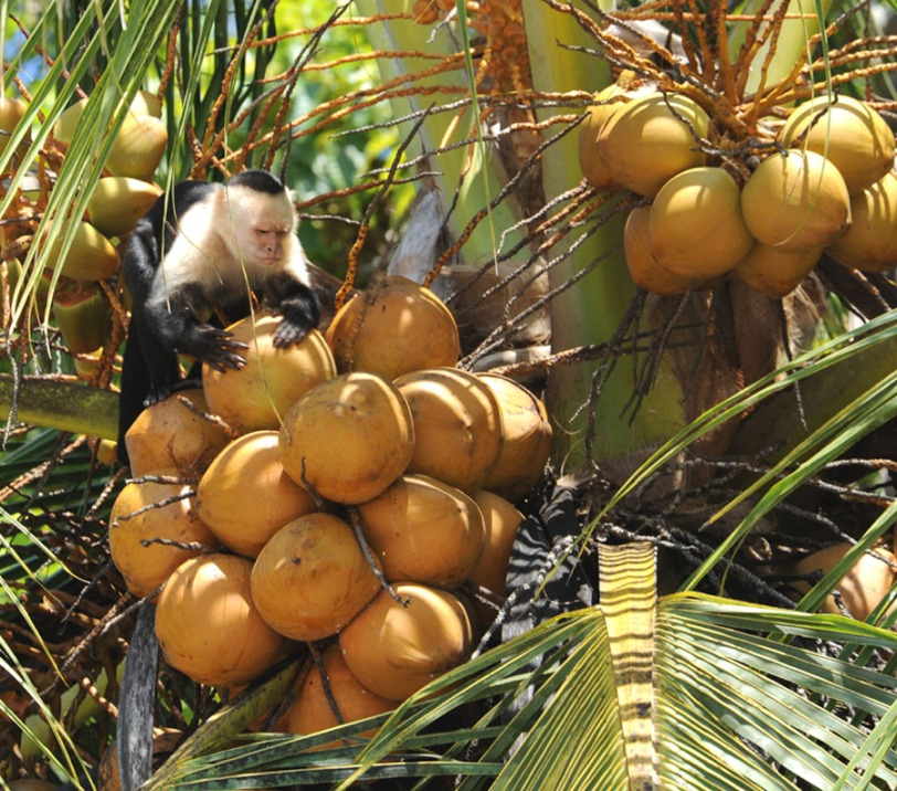 Kostaryka - fauna i flora (23)