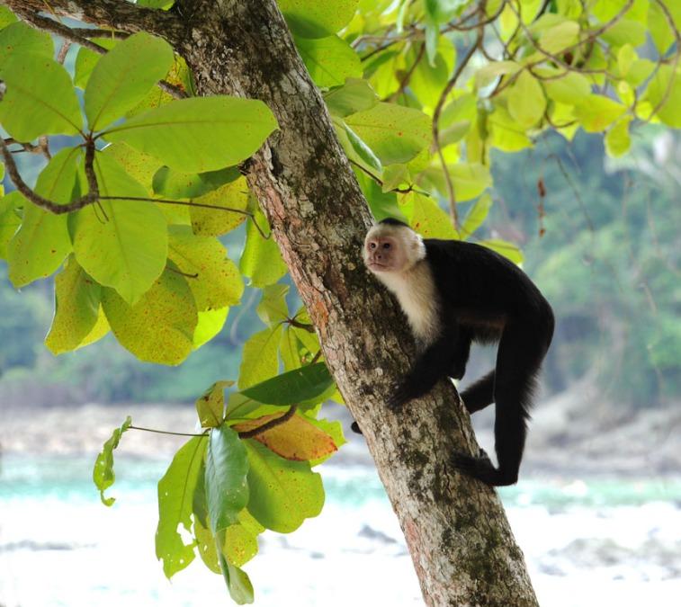 Kostaryka - fauna i flora (24)