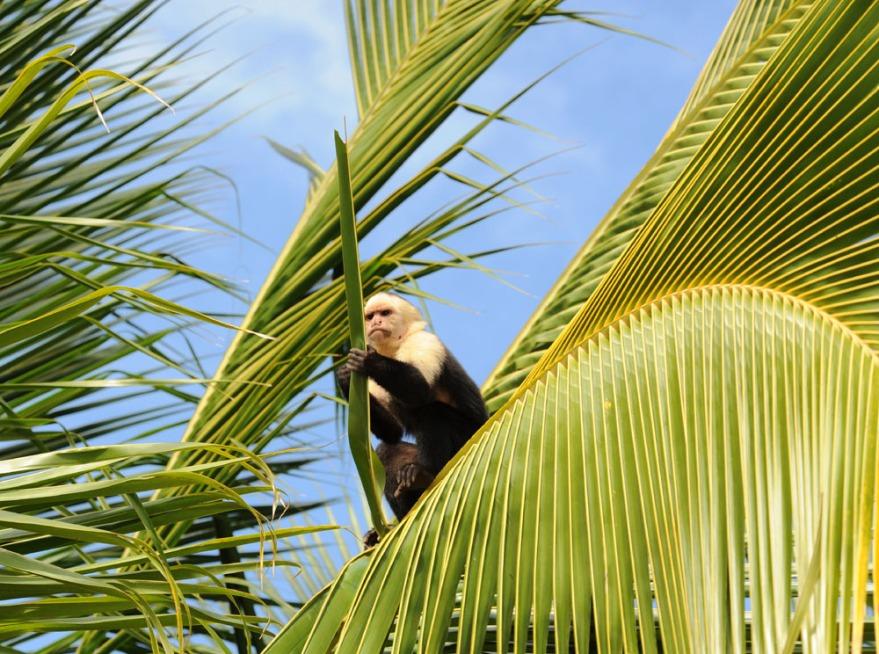 Kostaryka - fauna i flora (25)