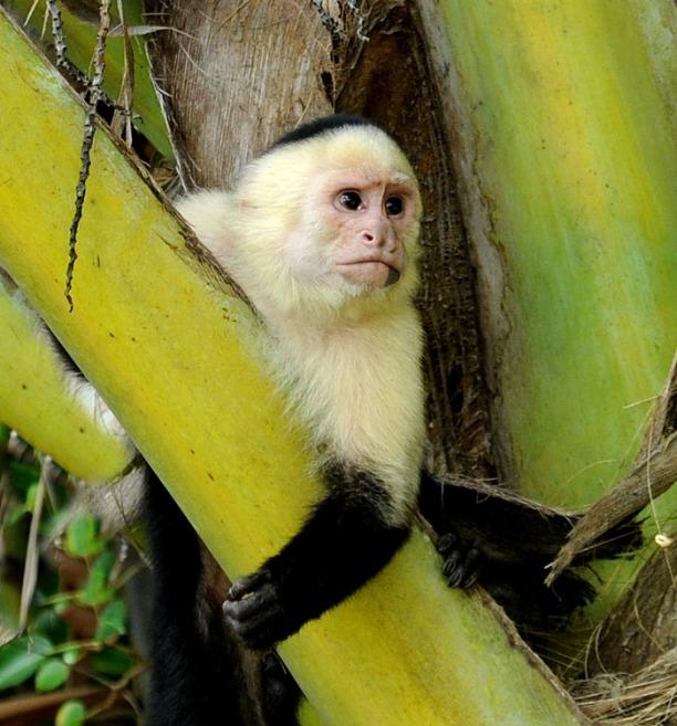 Kostaryka - fauna i flora (26)