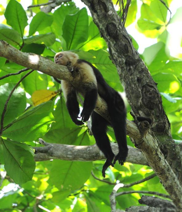 Kostaryka - fauna i flora (27)
