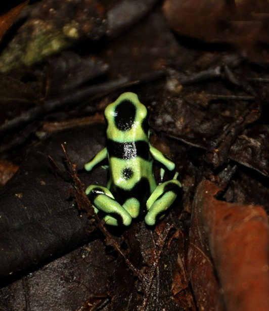 Kostaryka - fauna i flora (3)