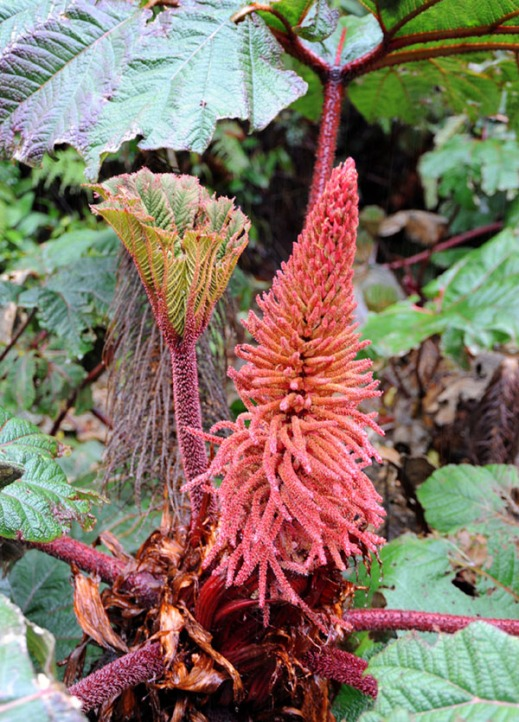 Kostaryka - fauna i flora (31)