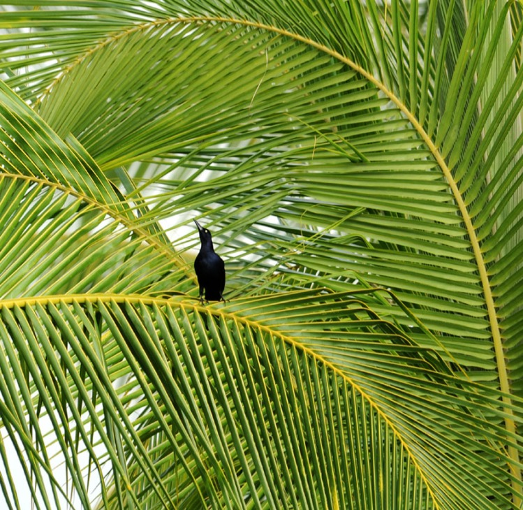 Kostaryka - fauna i flora (32)