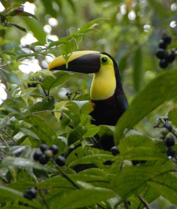Kostaryka - fauna i flora (34)