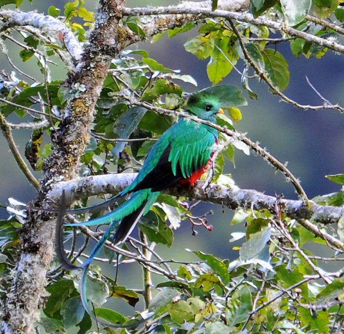 Kostaryka - fauna i flora (35)