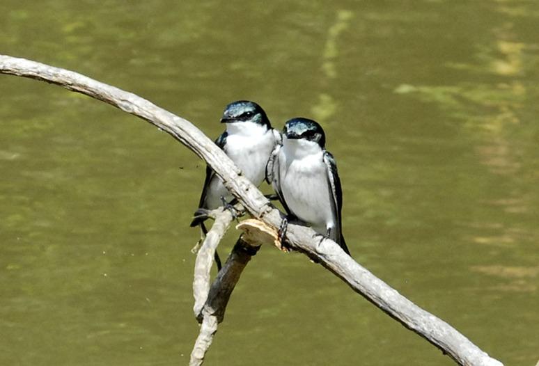Kostaryka - fauna i flora (36)