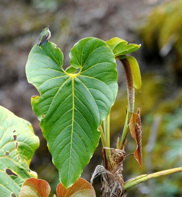 Kostaryka - fauna i flora (37)