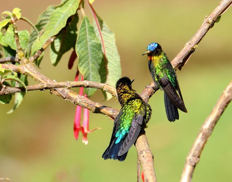 Kostaryka - fauna i flora (38)