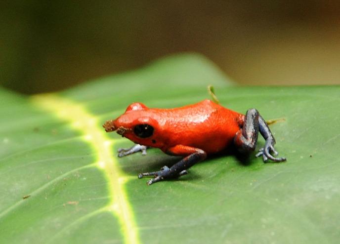 Kostaryka - fauna i flora (4)