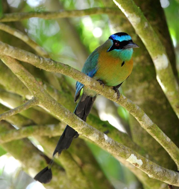 Kostaryka - fauna i flora (40)