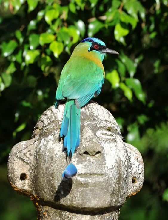 Kostaryka - fauna i flora (45)