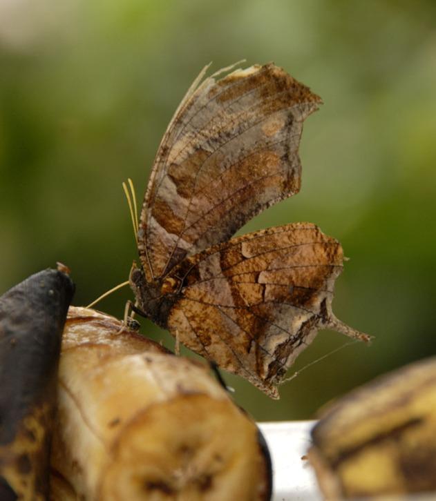 Kostaryka - fauna i flora (47)