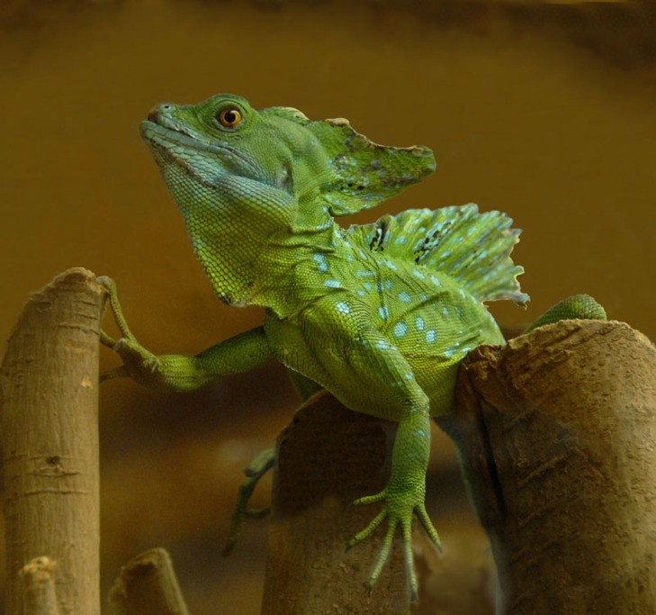 Kostaryka - fauna i flora (48)