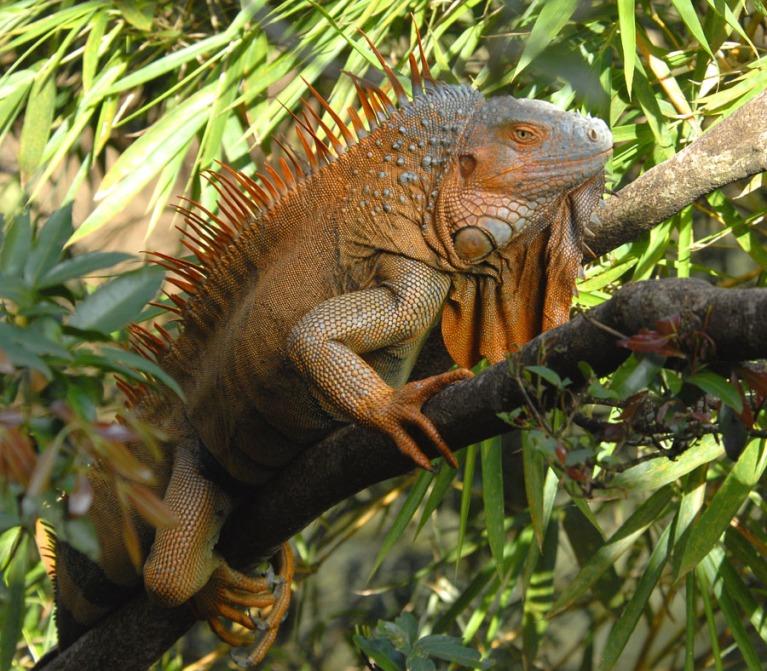 Kostaryka - fauna i flora (5)