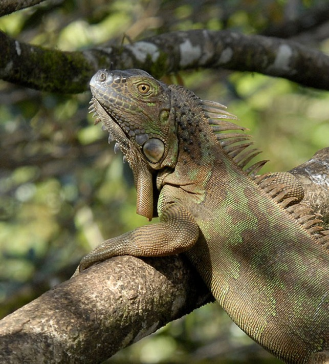 Kostaryka - fauna i flora (6)