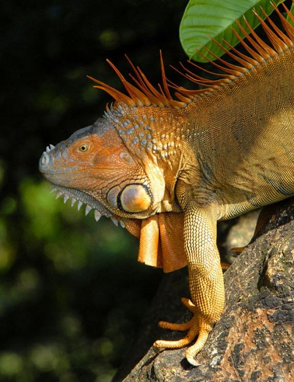 Kostaryka - fauna i flora (7)